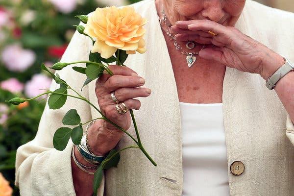 Аллергия на розы у детей и взрослых