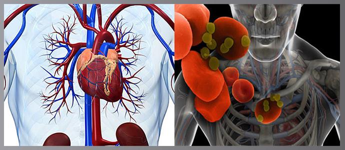 Расстройства дыхательной и сердечно-сосудистой системы