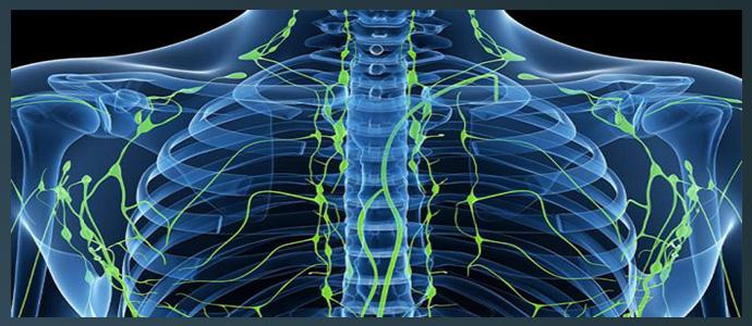 В-клеточная лимфома