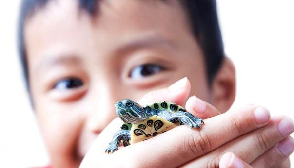 мальчик держит черепашку