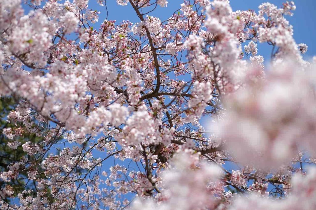 Симптомы и лечение сезонной аллергии у взрослых и детей