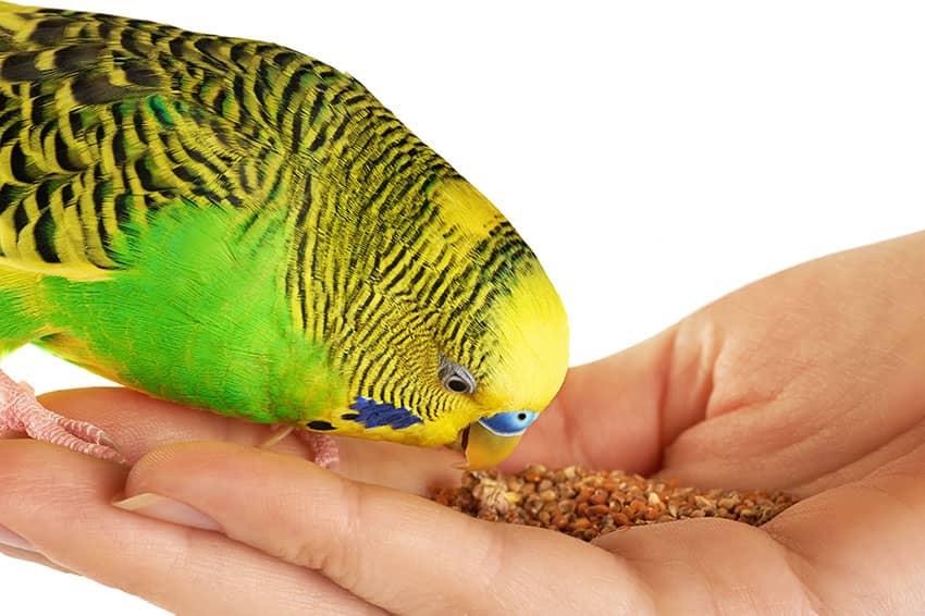 кормление птицы с руки