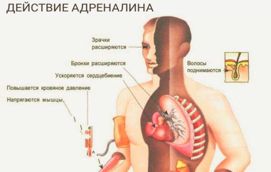 Как проявляется выброс адреналина в кровь чем это опасно?