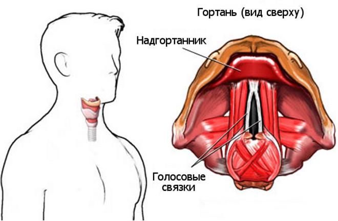 Ларинготрахеит у взрослых симптомы и лечение