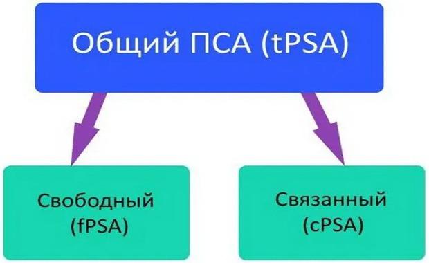 Общий, свободный и связанный ПСА