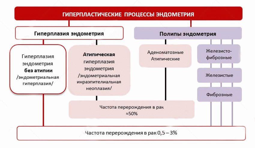 классификация гиперплазии эндометрия