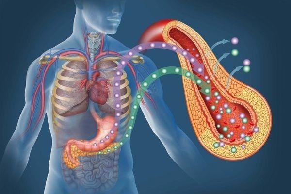 Что такое липома поджелудочной железы