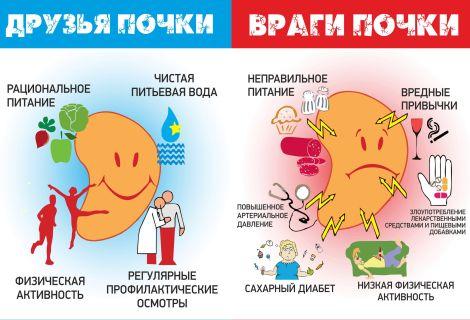 Что принимать для профилактики болезней почек?