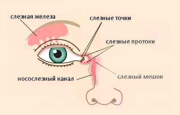 Носослезная система